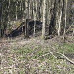 Skogsledens förlängning i Köpings–Ullvi