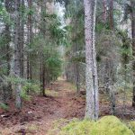 Färdvägar i skogsbygd
