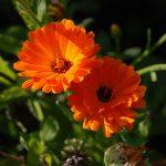 Trädgårdsarkeologi
