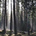 Väg 25 Sjöatorp–Forsa