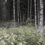 Norra Bråstorp