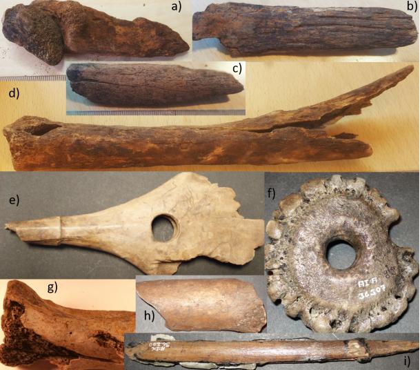 Bild publicerad i PLOS ONE föreställande några av benen från de olika grävningarna (a–d från 2019, e–i från 1940- och 1970-talsutgrävningarna).