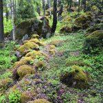 Boplats och ritualer vid Tolangravfältet