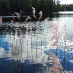 Våtmarksarkeologi längs Ostlänken